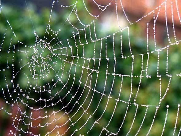 Resultado de imagem para teias de aranha
